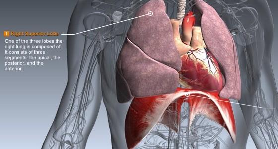 Human-Bio interaktive Lernapp über den Körper für Groß und Klein