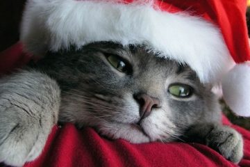 100 Pics Quiz Weihnachten Lösung aller Level