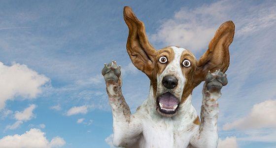 Klatsch der Hund - Das Abenteuer Cheats Hacks Tipps Tricks