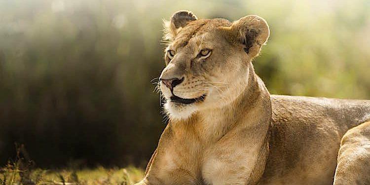 100 Pics Animal Planet Lösung aller Level