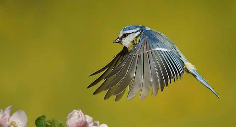 100 Pics Quiz Gartenvögel Lösung aller Level