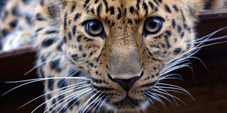 100 Pics Quiz Tiere Lösung aller Level