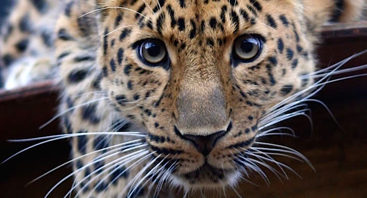 100 Pics Lösung Tiere