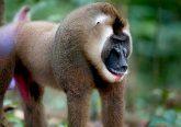 Apple: 200 Millionen US-Dollar für Forstwirtschaft-Fonds